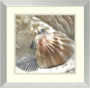 "18""H Donna Geissler Coral Shell III Framed Art Print White/Oyster Bay"