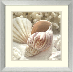 Donna Geissler Coral Shell II Framed Art Print White/Oyster Bay