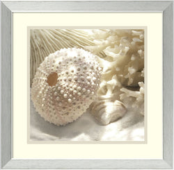 Amanti Art Donna Geissler Coral Shell I Framed Art Print White/Oyster Bay AA987016