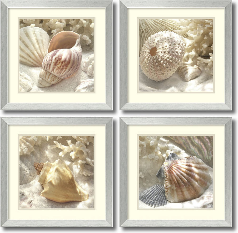 Donna Geissler Coral Shell- set of 4 Framed Art Print White/Oyster Bay