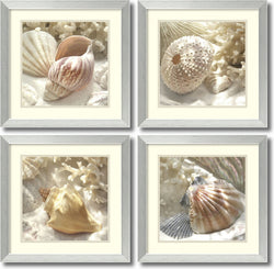 Amanti Art Donna Geissler Coral Shell- set of 4 Framed Art Print White/Oyster Bay AA995046