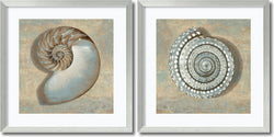 Caroline Kelly Aqua Shells Set of 2 Framed Art Print Seashell