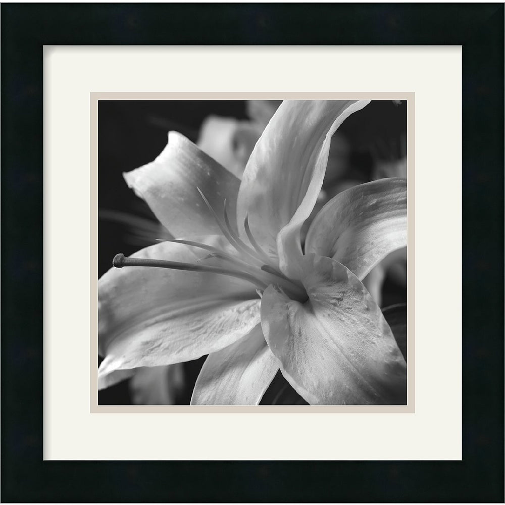 "16""H x 16""W Gaetano Art Group Pure Lily Framed Print"