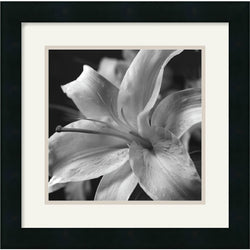 "16x16"" Gaetano Art Group Pure Lily Framed Print"