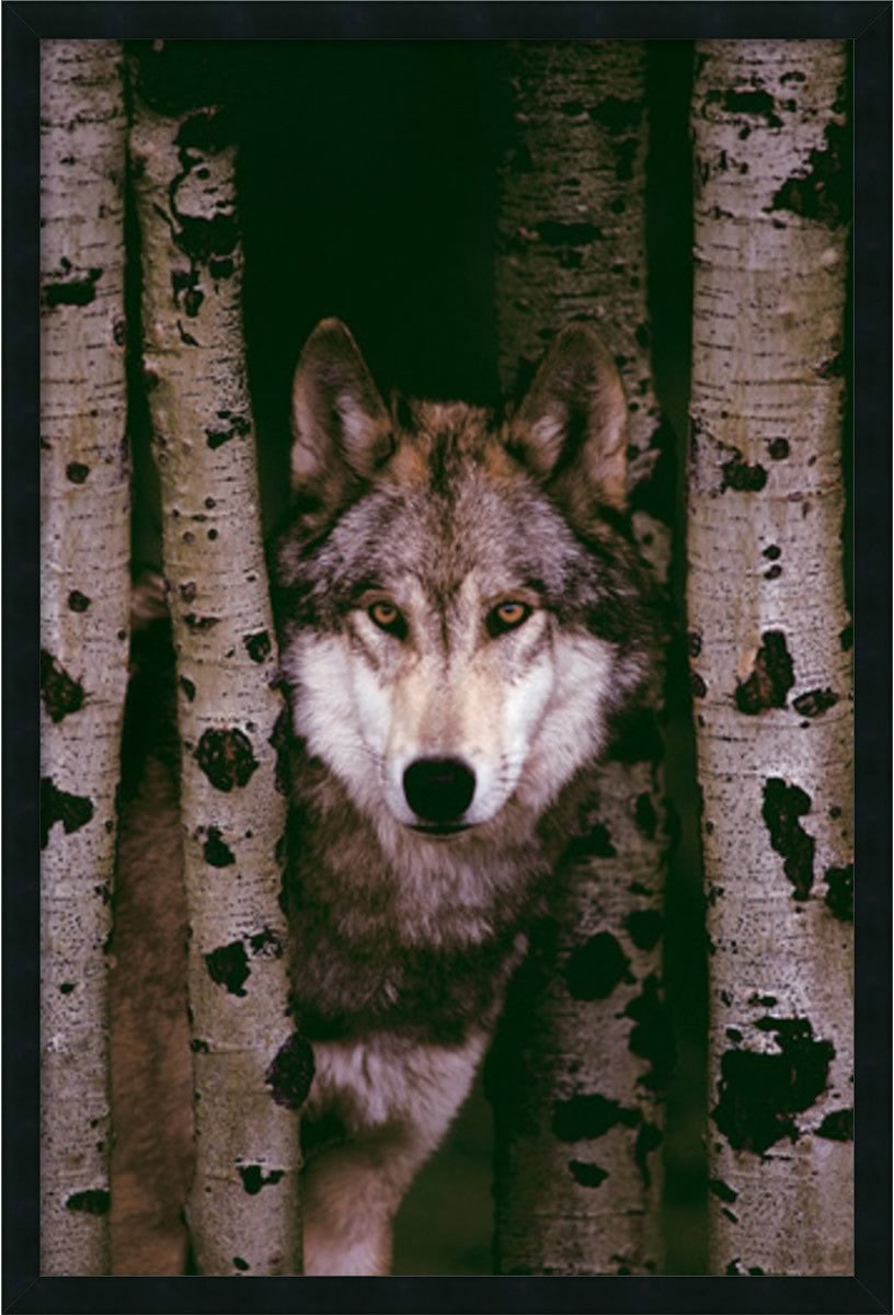 "38x26"" Gray Wolf Wall Art Satin Black"