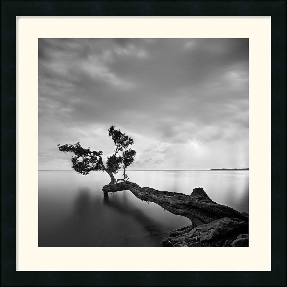 "24x24"" Moises Levy Water Tree Framed Print"