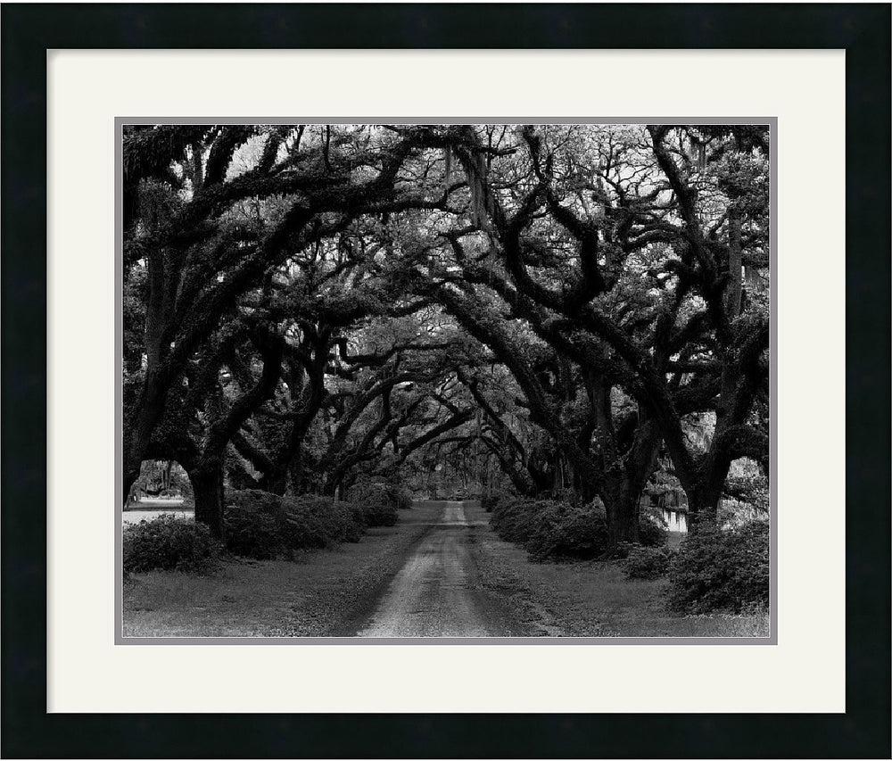 "22""H x 26""W Monte Nagler Path in the Oaks #2 Louisiana Framed Print"