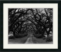 Amanti Art Monte Nagler Path in the Oaks #2 Louisiana Framed Print AA75003