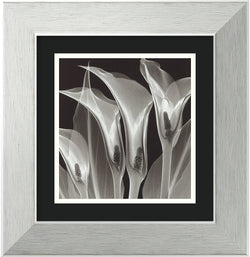 "14x14"" Steven N. Meyers Four Callas #3 Framed Print"