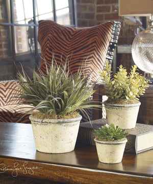 "15""H La Costa Greenery Set of 3"