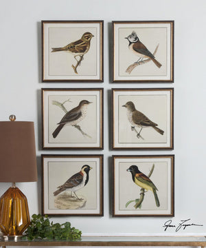 "15""H Spring Soldiers Bird Prints Set of 6"