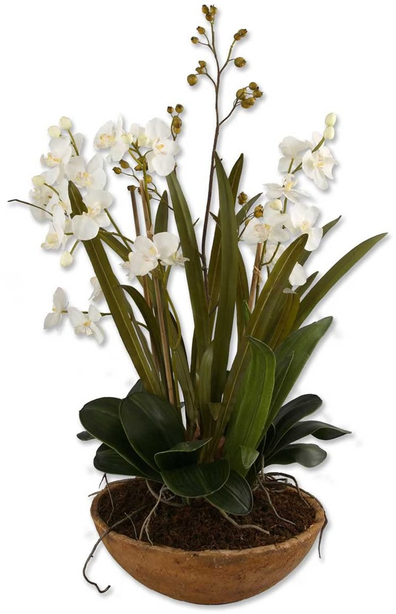 "34""H Moth Orchid Botanical Natural Brown"