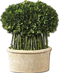 "17""h Willow Topiary Botanical Natural Evergreen"