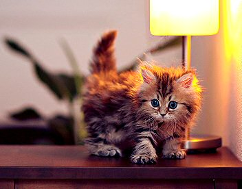 View Cat Lovers go Wild for these Cute Cat Lamps
