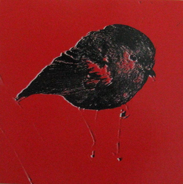 red chatham island robin - sold