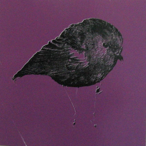purple chatham island robin