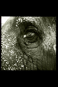 Temple Elephant Eye by Gigi Stoll Black and White