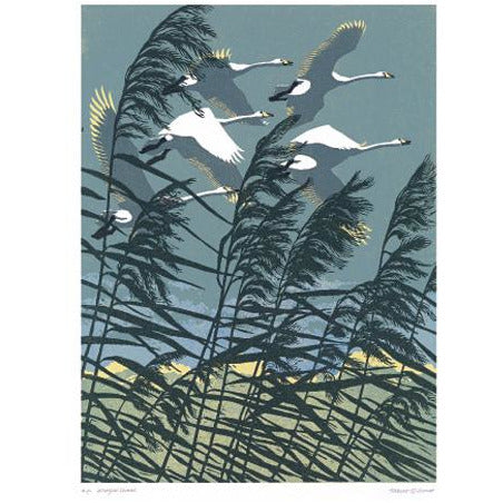 Whooper Swans Linoprint Card - Art Angels by Robert Gilmor