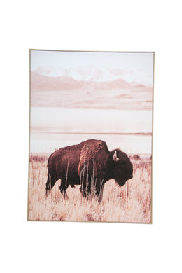 Plains Bison Canvas Wall Art