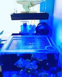 Waterbox CUBE 4 Lid