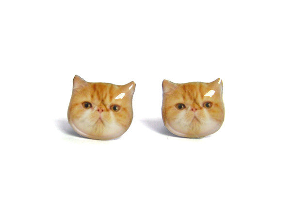 Orange and White Exotic Cat Kitten Stud Earrings