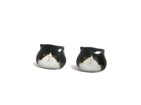 Black and white Exotic Cat Kitten Stud Earrings