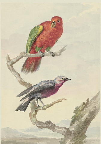 2 birds, including 1 red - green parrot (244)