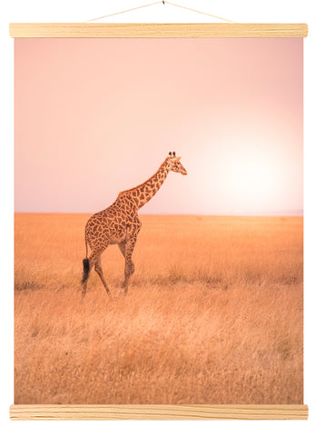 Solitary giraffe, savannah of Serengeti National Park, Tanzania, Africa (547)