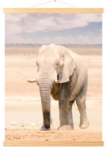 African Elephant in Etosha National Park in Namibia (553)