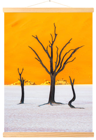 Dead camelthorn and red dunes at Deadvlei, Sossusvlei, Namib-Naukluft National Park, Namibia (558)
