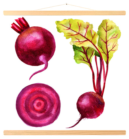 Watercolor beet root, Swiss chard leaves, slice (573)