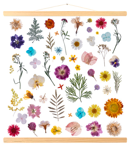 Multiple dried flowers (577)
