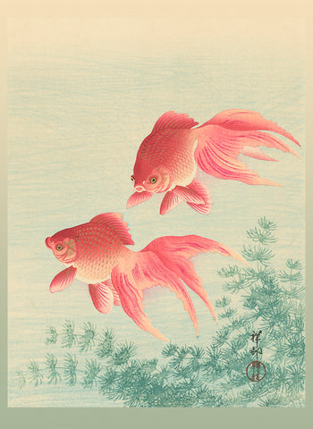 2 goldfish with veiled tail (253)