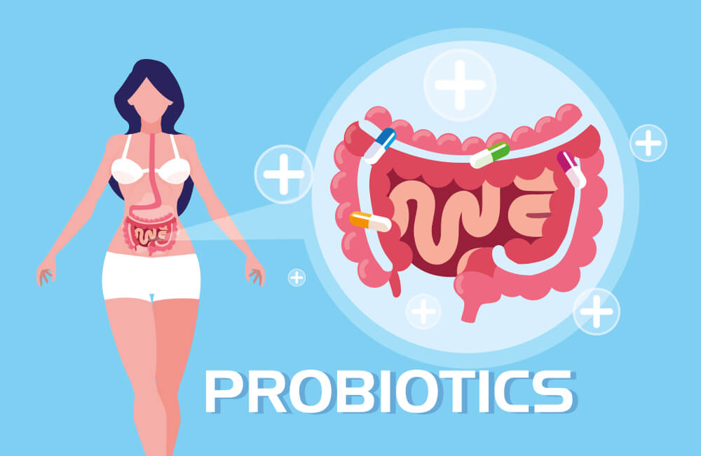Probiotics are Essential to Get Rid of Visceral Fat