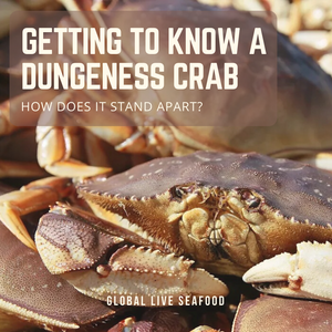 Getting To Know A Dungeness Crab – How Does It Stand Apart?