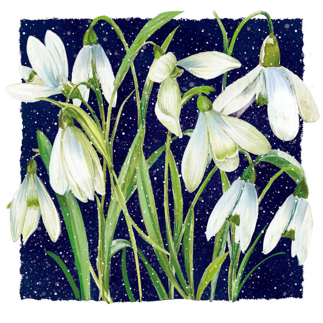 Snowdrops Christmas Cards - Pack of 10