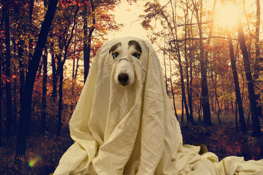 Do Your Pets See Ghosts?