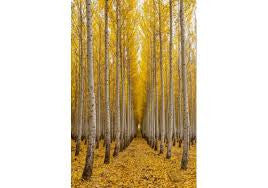 Autumn Tree Farm By Knowles Gallery - Katy Furniture