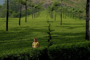 Open image in slideshow, Tea Field