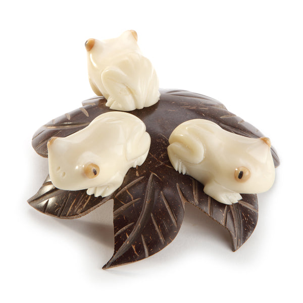 Tagua Frogs on Coco Leaf