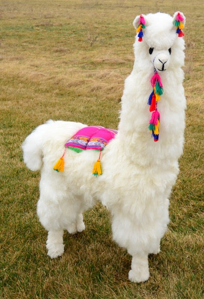 Display Alpaca – 45″