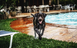 How to Keep Your Dog Cool This Summer - 3 Must Have Products for Dogs