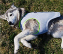 Cooling Vest, Cooling, Summer, Vest, Clothing, Shoes & Accessories, HappyDog, dogs
