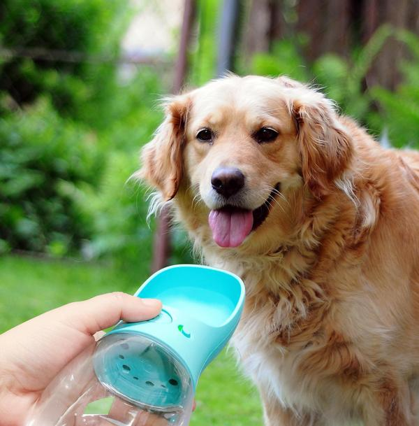 Compact Portable Water Bottle, Dispenser, Travel, Water Bottle, Bowls & Feeders, HappyDog, dogs