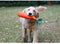 Carrot Plush Toy, Carrot, IQ, Toy, Toys, HappyDog, dogs