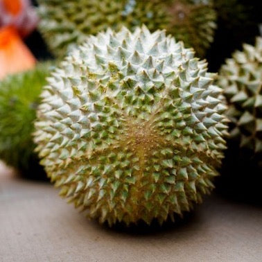 A picture containing the base of the MSW durian with a visible star-like pattern