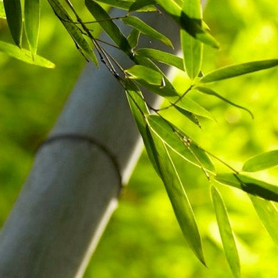 All you ever wanted to know about Bamboo