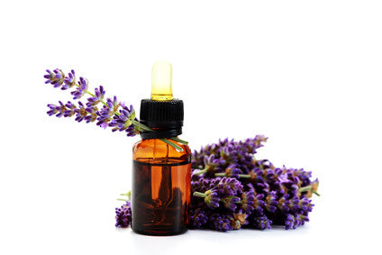 4 Reasons to Fall in Love with Lavender ...