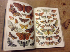 Our Country's Butterflies and Moths