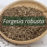 Fargesia robusta bamboo seeds germinate quickly